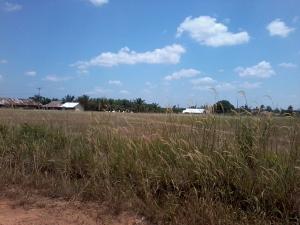 lapangan penuh ilalang